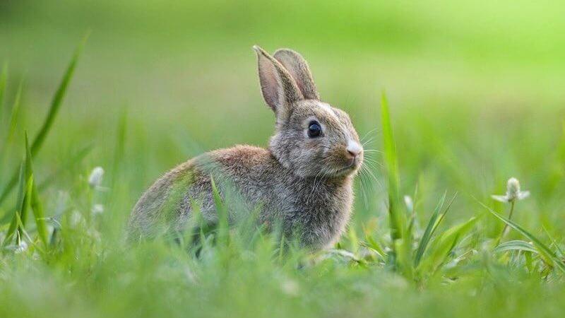 女王陛下のお気に入り:ラストシーンとウサギの意味を考えた